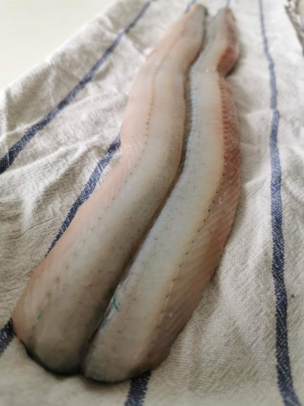 Pandestegt hornfisk